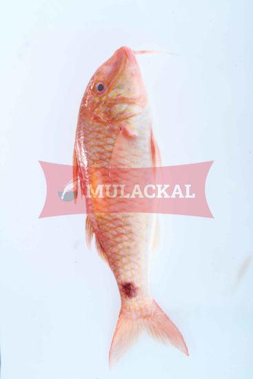 Mulackal Red Mullet 100/200 1kg