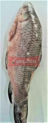 DSDY Rohu brilled 2kg+ 20kg