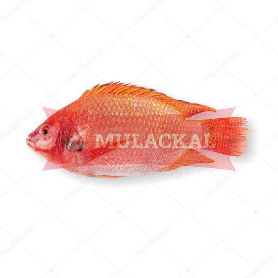Red Tilapia 500/800 4kg