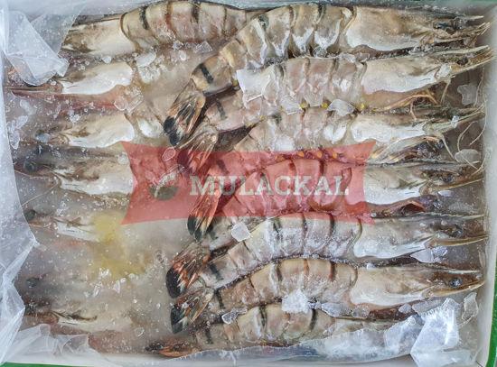 MULACKAL Shrimps HOSO 16/20 1kg