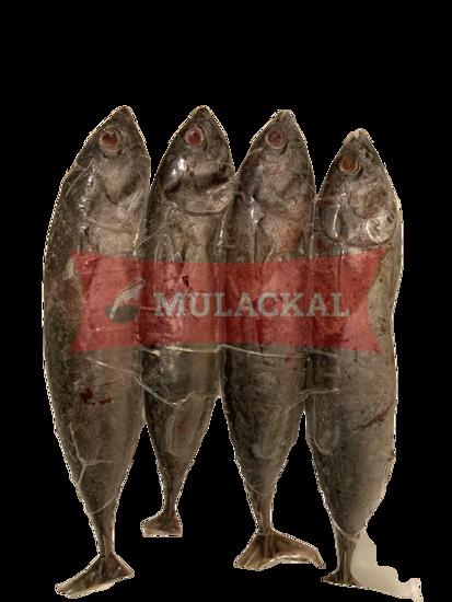 DAYSEADAY Bullet Tuna 10x1kg